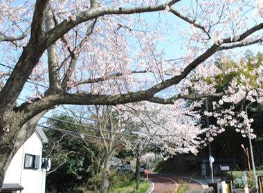 20100403kamakurayama