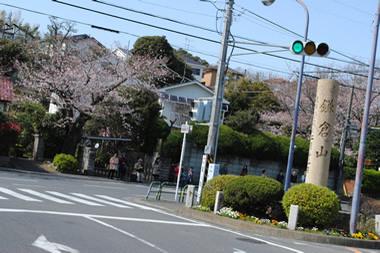 20100403kamakurayama2